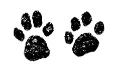 Paws_from Fiona
